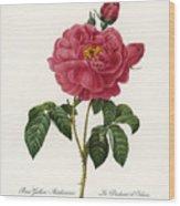 Rosa Gallica Wood Print