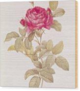 Rosa Gallica Pontiana Wood Print by Pierre Joseph Redoute