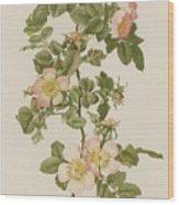 Rosa Hibernica Wood Print