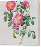 Rosa Lumila Wood Print