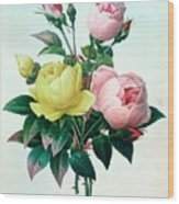 Rosa Lutea And Rosa Indica Wood Print by Pierre Joseph Redoute