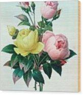 Rosa Lutea And Rosa Indica Wood Print