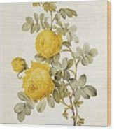 Rosa Sulfurea Wood Print by Pierre Redoute