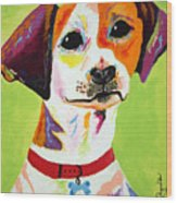 Roscoe The Jack Russell Terrier Wood Print