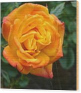 Rose - Irish Eyes Wood Print
