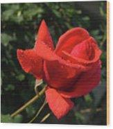 Rose 03 Wood Print