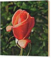 Rose 04 Wood Print