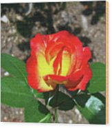 Rose 07 Wood Print