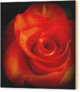 Rose 2 Wood Print