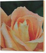 Rose 37 Wood Print