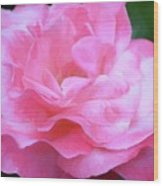 Rose 384 Wood Print