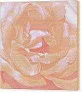 Rose 41 Wood Print