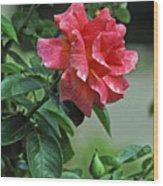 Rose 7898 Wood Print