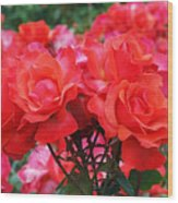 Rose Abundance Wood Print by Rona Black