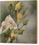 Rose And Buds Wood Print by Atul Daimari