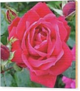 Rose And Buds - Double Knock Out Rose Wood Print