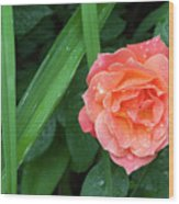 Rose And Day Lily Lives Wood Print