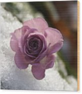 Rose And Snow Wood Print