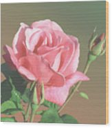 Rose And Two Buds Wood Print