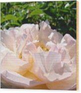 Rose Art Prints Canvas Sunlit Pink Rose Garden Baslee Troutman Wood Print