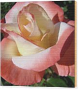 Rose Artwork Floral Pink White Roses Baslee Troutman Wood Print