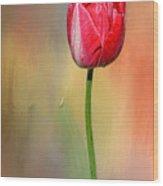 Red Tulip At Sunset By Kaye Menner Wood Print