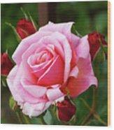 Rose Attendants Wood Print