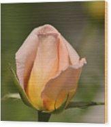 Rose Wood Print by Atul Daimari