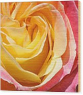 Rose Bloom Wood Print