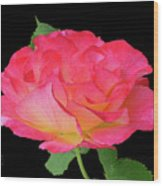Rose Blushing Cutout Wood Print