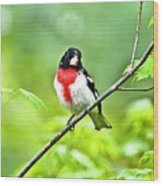 Rose-breasted Grosbeak 2 Wood Print