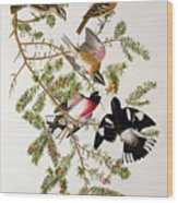Rose Breasted Grosbeak Wood Print by John James Audubon