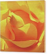 Rose Bright Orange Sunny Rose Flower Floral Baslee Troutman Wood Print