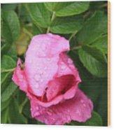Rose Bud And Bee Wood Print