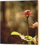 Rose Buds Wood Print