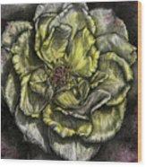 Rose Cream Wood Print