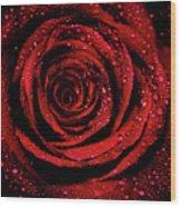 Rose Dew Wood Print