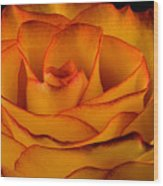 Rose Edge  Wood Print