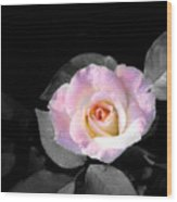 Rose Emergance Wood Print