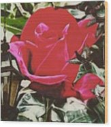 Rose Evening,oil Wood Print