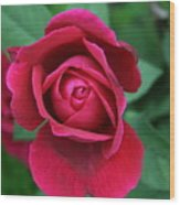 Rose Eye Wood Print