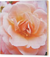 Rose Floral Art Print Peach Pink Roses Garden Canvas Baslee Troutman Wood Print