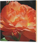 Rose Flower Art Prints Oragne Roses Summer Botanical Baslee Troutman Wood Print