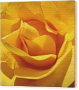 Rose Flower Orange Yellow Roses 1 Golden Sunlit Rose Baslee Troutman Wood Print