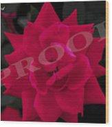 Rose Flower Wood Print