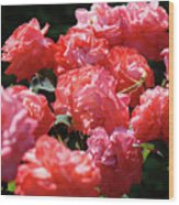 Rose Garden Art Prints Pink Red Rose Flowers Baslee Troutman Wood Print