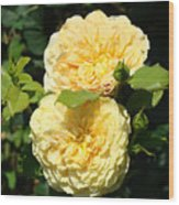 Rose Garden Floral Art Print Yellow Roses Canvas Baslee Troutman Wood Print