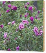 Rose Garden Wood Print by Frank Tschakert