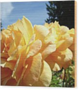 Rose Garden Yellow Peach Orange Roses Flowers 3 Botanical Art Baslee Troutman Wood Print