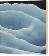 Rose Iceberg Wood Print